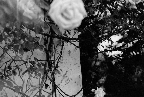 b&w, black & white, black and white, cute, flower