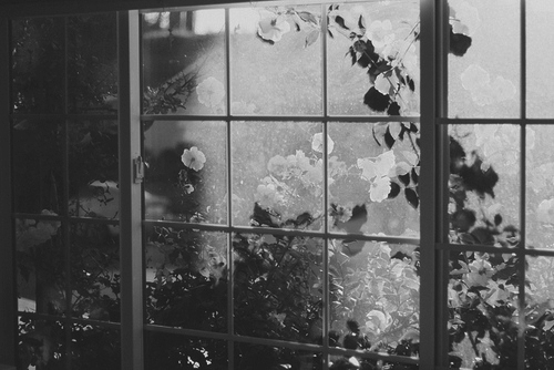b&w, black & white, black and white, cute, flower, flowers, nature, photo, photography, place, window