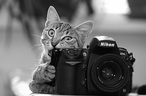 b&w, black and white, camera, cat, cool