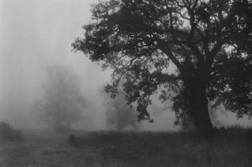 b&w, black and white, fog, forest, landscape