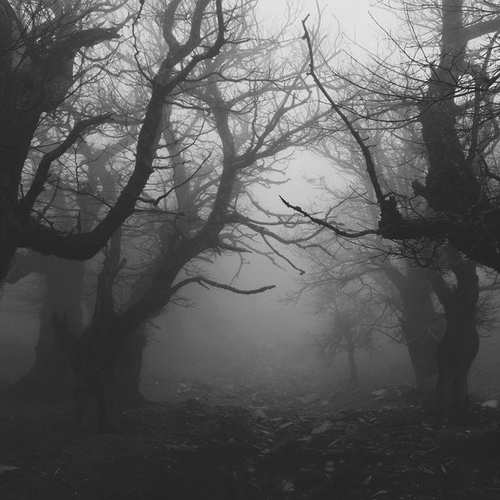 b&w, black and white, fog, forest, mist
