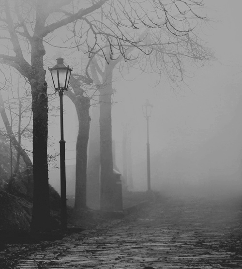 b&w, black and white, fog, light, lights, mist, street, tree, trees, urban