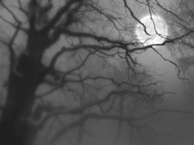 b&w, black and white, fog, moon, night, sky, tree, trees