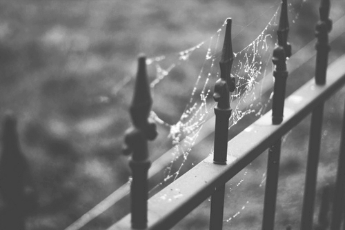 b&w, black and white, spider, spiderweb