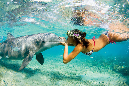 bathingsuit, bikini, dolphin, dolphins, girl, swim, underwater, water