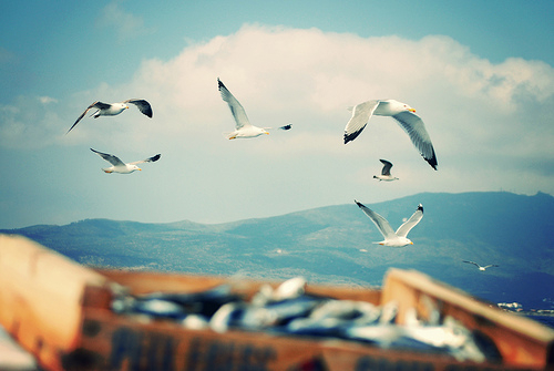 beach, birds, edge, fashion, fish, mountain, ocean, outside, retro, style, vintage