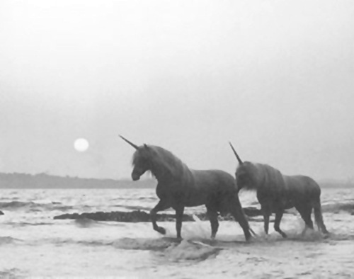 beach, black and white, photography, sea, shore, sun, unicorn, unicorns, vintage