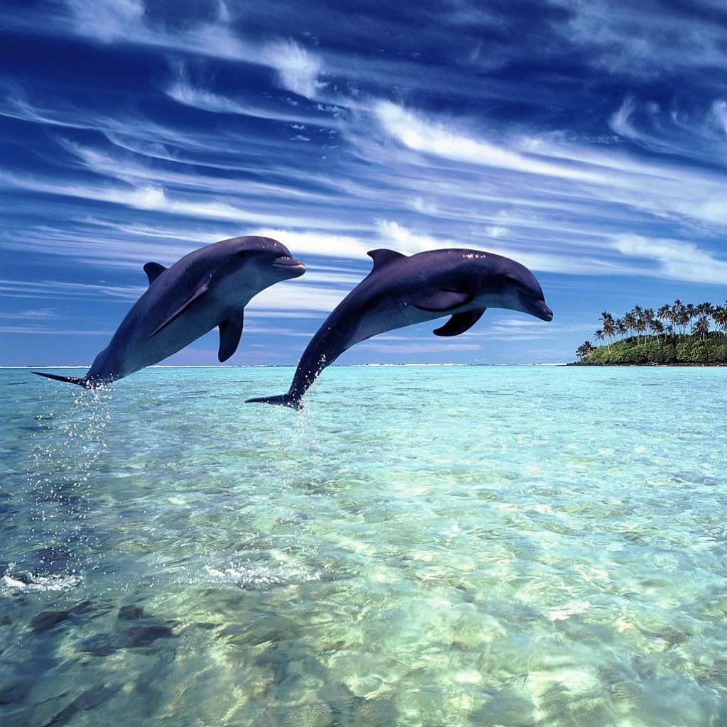 beach, cool, dolphin, paradise, photography