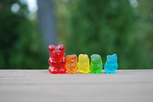 bear, colorido, colors, cores, photo
