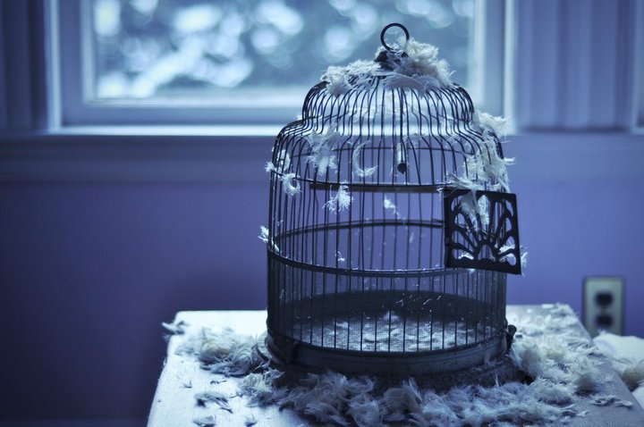 beautiful, bird, cage, free, freedom