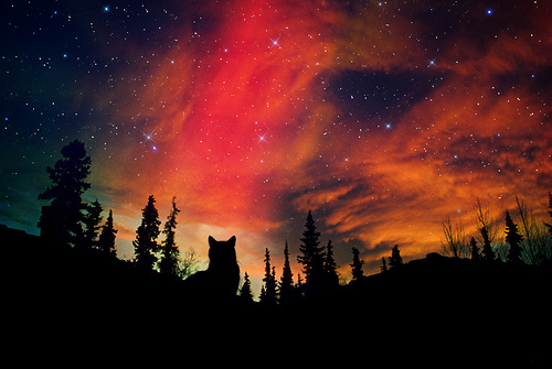 beautiful, black, colorful, dark, howl, love, night, sky, wolf
