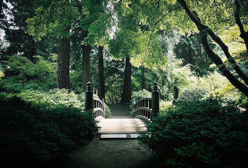 beautiful, bridge, film, forest, green, leaves, nature, photogrpahy, trees