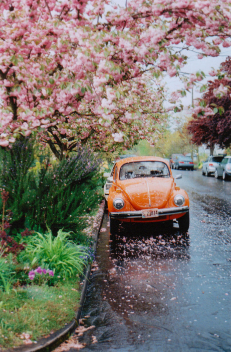 beautiful, car, cute, flowers, photo