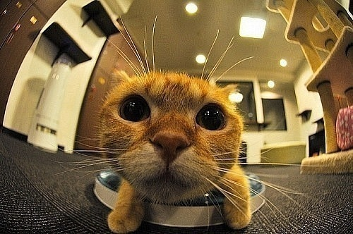 beautiful, cat, cool, fish eye, fisheye