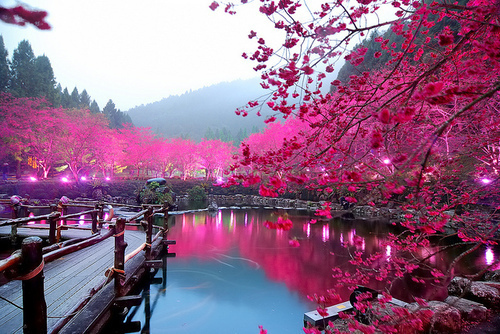 beautiful, colourful, love, nature, photography, pink, pretty, sceneries, scenery, trees, water