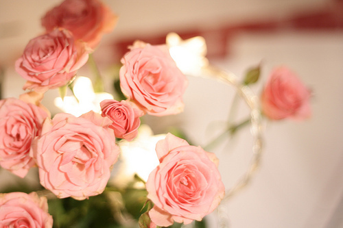 beautiful, cute, flores, flower, flowers, photography, pink, rosas, rose, roses