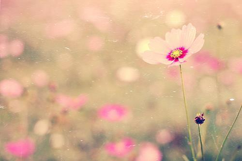beautiful, cute, flower, flowers, nature, photography, pink, spring, windy