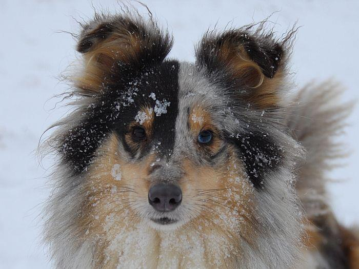 beautiful, dog, fashion, forever, ice