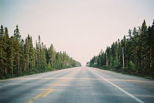 beautiful, endless, forest, nature, photo, photography, road, street, trees