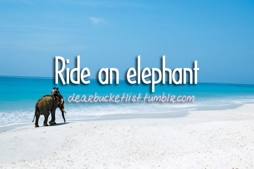before i die, bucket list, dearbucketlist, elephant, people, ride, sand, sea, water