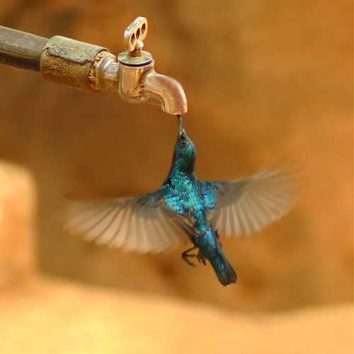bird, dare, drink, drip, dry