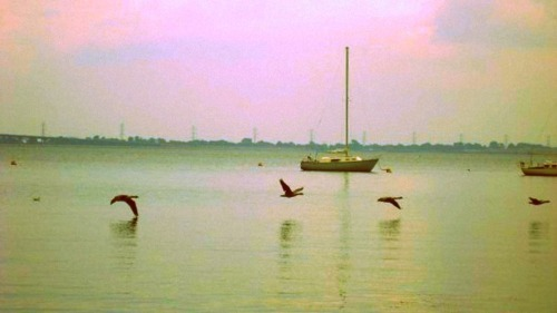 birds, boat, flying, nature, photography, sailboat, water