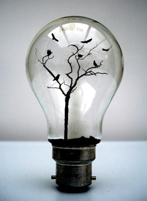 birds, dirt, lightbulb, photography, tree