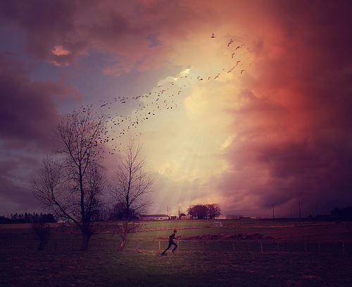 birds, fantasy, field, photography, purple