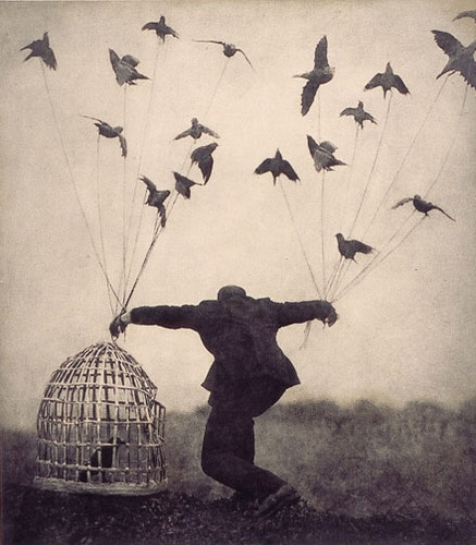 birds, freedom, man, vintage