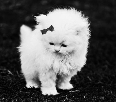 black and white, bow, cat, cute, lovely