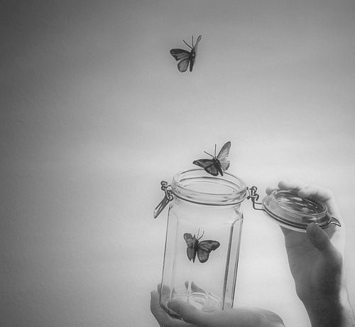 black and white, butterfly, free, freedom, jar