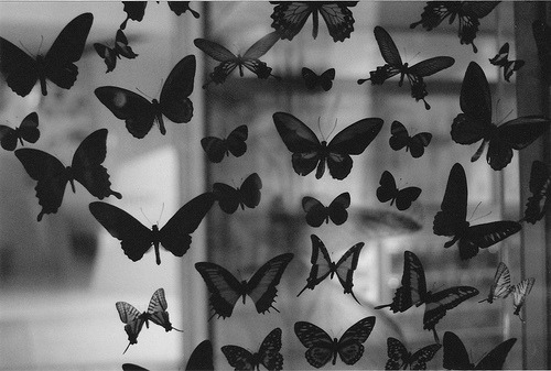 black and white, butterfly, photography