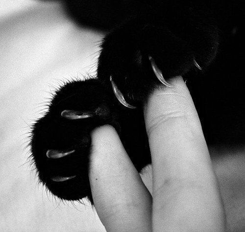 black and white, cat, claws, cute, fingers