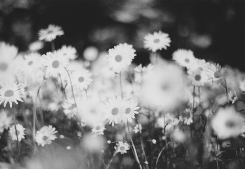 black and white, cute, flowers, photograhy