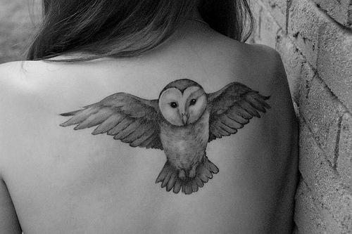 black and white, owl, owls, tattoos