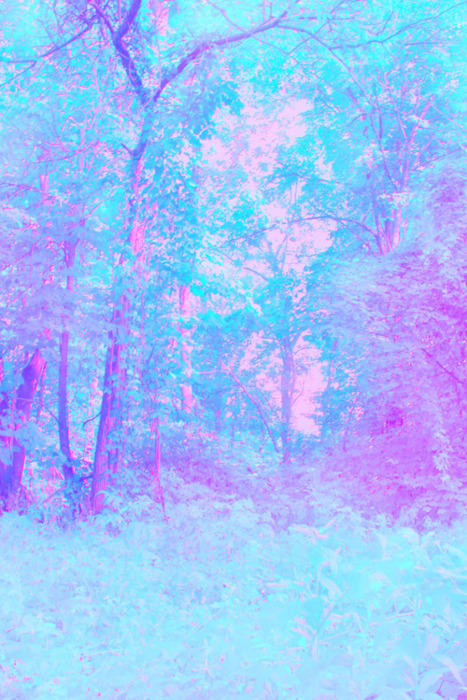 blue, bright, forest, light, pastel, pink, purple, trees, trippy
