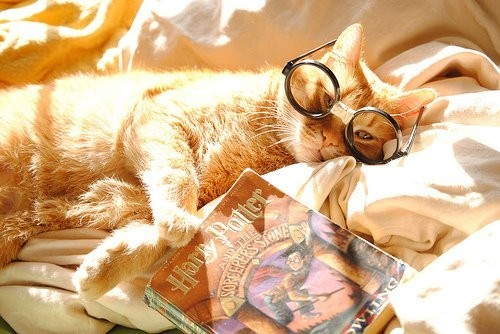 book, cat, cute, harry potter, love