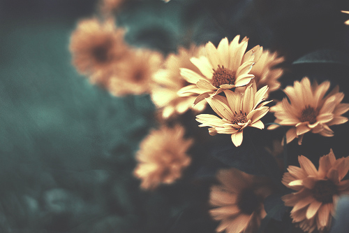 boy, flowers country, hipster, love, nature, phototgraphy