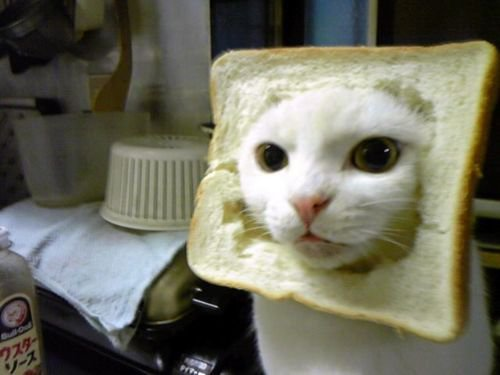 bread, cat, cute, lol, sweet