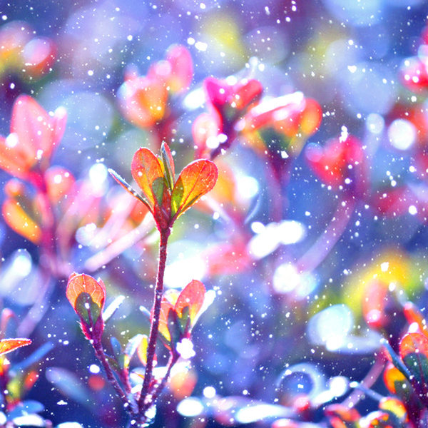 1000 images about vibrant color on pinterest nature for Bright pretty colors
