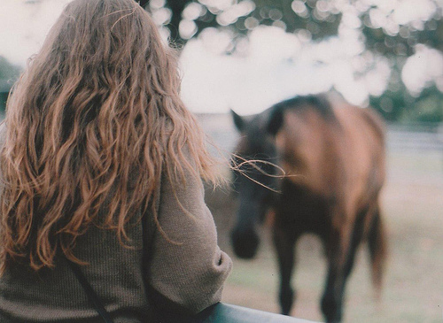 brown hair, cute, horse, nature