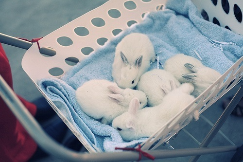bunnies, bunnies in a basket, cute