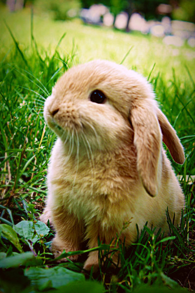 bunny, cute, rabbit, sweet