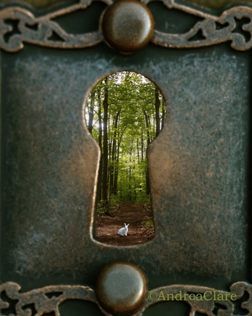 bunny, forest, garden, gate, nature