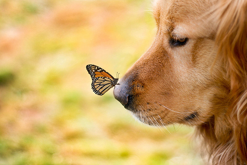 butterfly, cute, dog, dogs