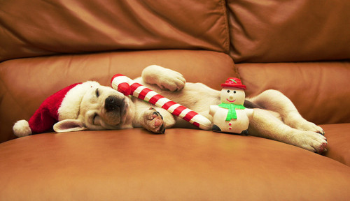 candy cane, christmas, cute, dog, dogs