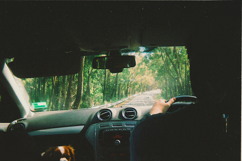 car, driving, forest, hipster, indie, landscape, nature, photography, road, summer, trees, vintage