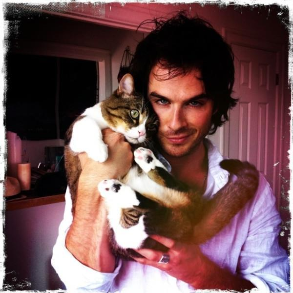 cat, cute, damon salvatore, ian somerhalder