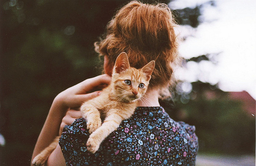 cat, cute, ginger, girl, hair