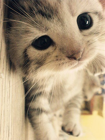 cat, cute, photography